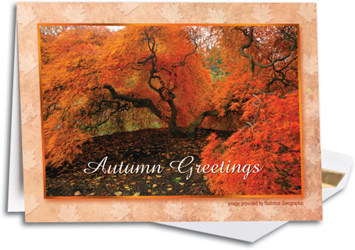 Fall color deluxe thanksgiving folding card smartpractice sharpercards fall color deluxe thanksgiving folding card by national geographic m4hsunfo